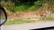 Маймунка язди куче