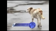 Нападнати от бездомни кучета - Ямбол