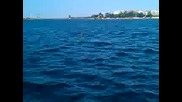 Понко преплува 7 км от Несебър до Св. Влас еп. 05