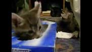 Котета В Кутия