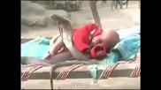 4 Кобри пазят спящо Бебе..