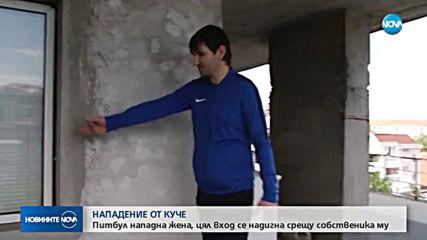 Агресивен питбул разкъса крака на жена в Асеновград