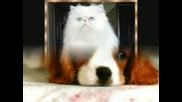Sweet Cats And Dogs