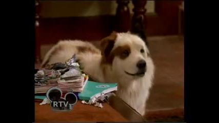 Куче с Блог Откъс от С1е8 - Стан спира да говори