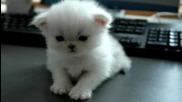 Интерестни и сладки котета