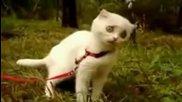 Котка прави смешна физиономия докато яде трева