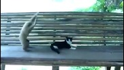 Нахална маймунка се закача с коте