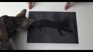 Тази оптична илюзия ще ви накара да онемеете