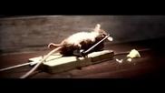 Мишката и капан!