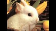 Зайченцето бяло