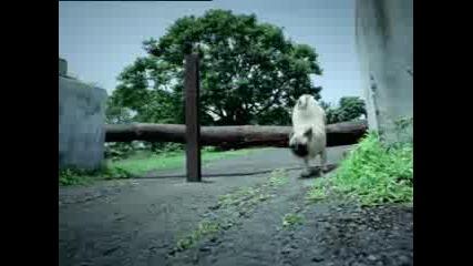 Hutch Ad...реклама с мопсе