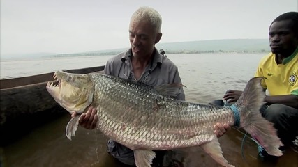 Тигрова риба - Речни чудовища