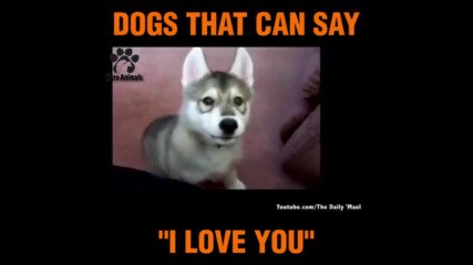 Невероятно! Кучета казват I Love You!
