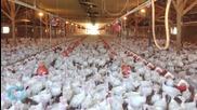 Growing Outbreak: Deadly Bird Flu Hits Iowa Egg Farm