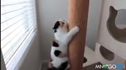 Коте пило Редбул