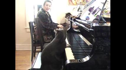 Това коте има талант !