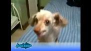 Това куче ще ви спука от смях...