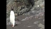Пингвин помисли тюлен за скала