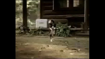 Bud Light Advertising Dog