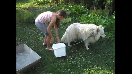 къпането на кучето ми