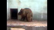мечешка любов в зоопарк Ловеч 2част