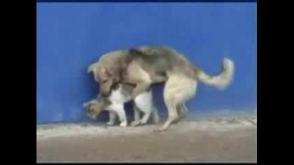 Най - глупавото куче на света - Смях na 100%