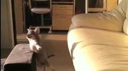 Puppy се готви за скок .. ;dd