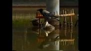 Врана проявява висша интелигентност при риболов!