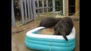 Слончета лудуват в басейн