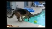Ще успее ли кучето - Смях
