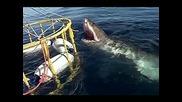 Най - Големите Акули На Света