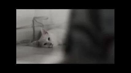 Котки си избират мебели - реклама