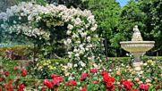 И... Нека се Разходим сред Зелени Градини с Цветя - релакс