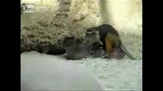 Маймуна Язди Сърна