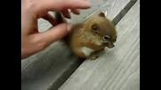 Малка сладка катеричка