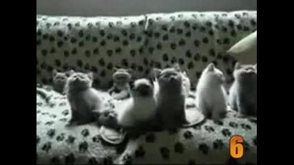 10 Cutest Cat Moments