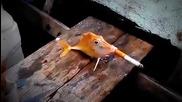 Жестоки рибари накараха риба да пуши цигара :(