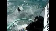 Акула Атакува Човек