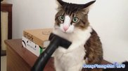 Котки ги почистват с прахосмукачка ( Забавна Компилация )