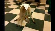 Как изглежда бебе кенгуро?