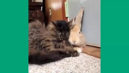 Най-смешните котки - компилация