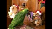 Папагалче Пее Коледна Песен!!!