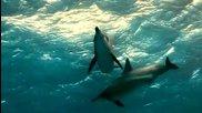 На един делфин - Селвер