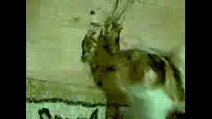 Котка Яде Joint
