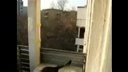 Котето направи луд паркур скок!!!