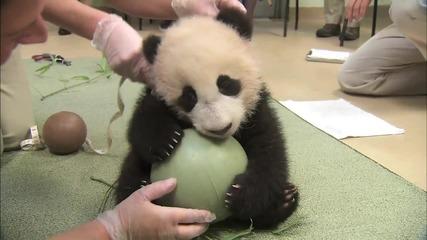 Сладка панда { Топката си е моя !! : D }