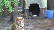 Катеричка краде от храната на куче:)