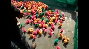 Пиленца с различни цветове в Китай