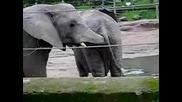 гладен слон - търси и намира =d
