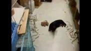 [] Говорещо куче !!
